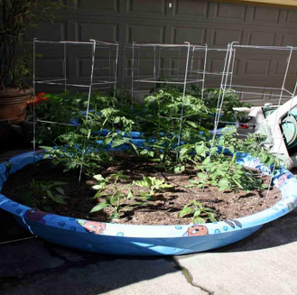 Growing vegetables yourself can be fun and lends to being self-sufficient